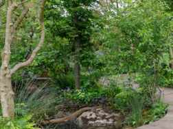 Garden Inspiration from RHS Chelsea Flower Show